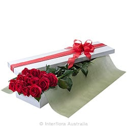 PRESENTATION BOX OF 12 LONG STEMMED RED ROSE