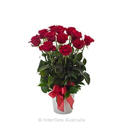 ARRANGEMENT OF 12 RED ROSES IN A CERAMIC POT