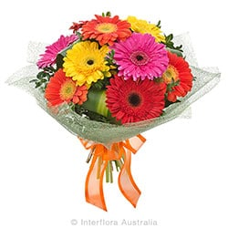 CARNIVALE Bouquet of mixed gerberas AUS 807