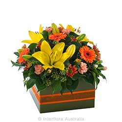 DAZZLING Mixed box arrangement AUS 734