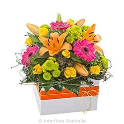 FIESTA Bright mixed box arrangement AUS 721