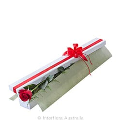 SINGLE RED LONG STEMMED ROSE IN PRESENTATION BOX