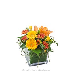 GINGER Cube of Orange & Yellow Tones AUS 720