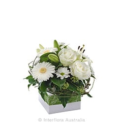 HOPE Petite box arrangement suitable for home AUS 829