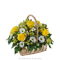 LEMON N LIME Petite mixed basket AUS 827