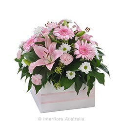 SOFTNESS Mixed box arrangement AUS 738