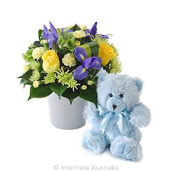 THOMAS Mixed arrangement with a teddy bear AUS 751