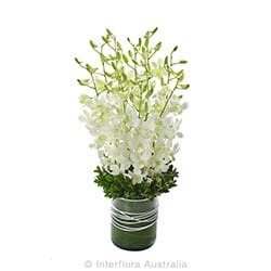 VIRTUE Stunning Orchids in a glass vase AUS 710